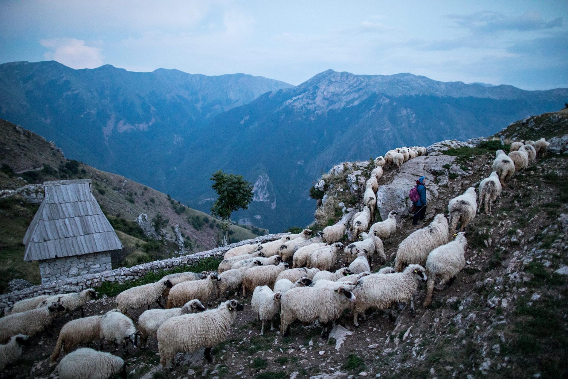 Bosna-Hersek Multi-Disiplin Etkinlik Kampı